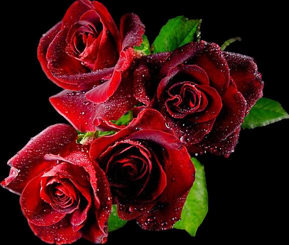 Gifs animes et non animes de fleurs for Site de fleurs